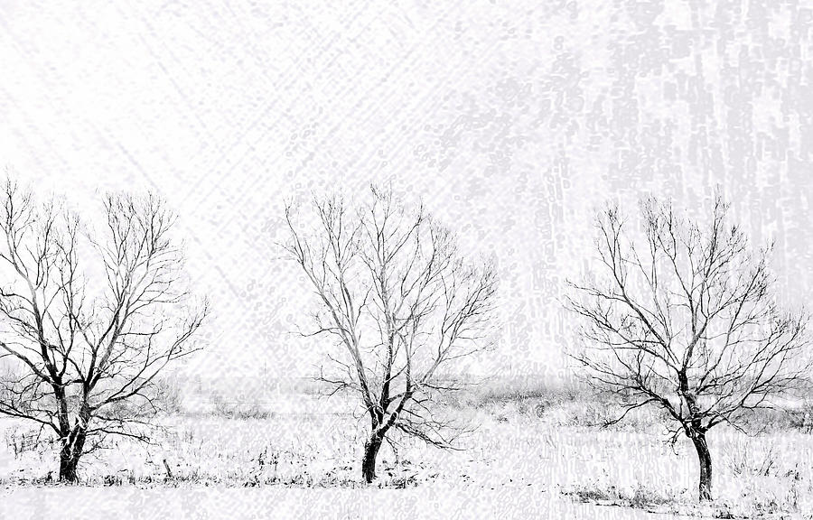 Winter Photograph - In A Line. Winter Trees by Jenny Rainbow