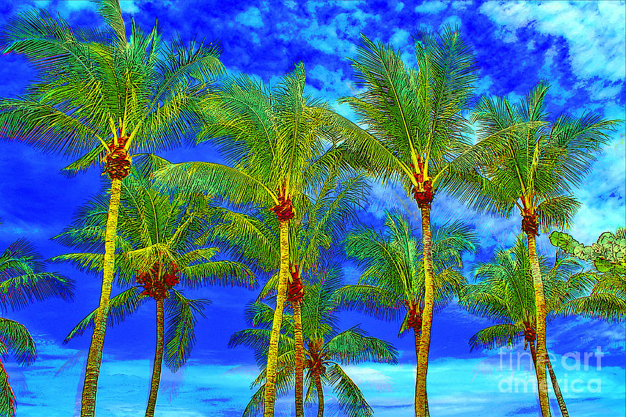 Palm Trees Photograph - In A World of Palms by Keri West