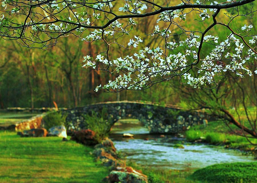 Dogwood Photograph - In Bloom by Benjamin Yeager