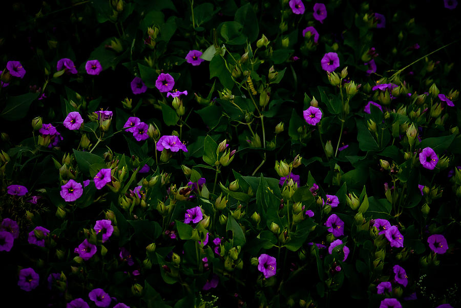 Purple Photograph - In Bloom by Swift Family