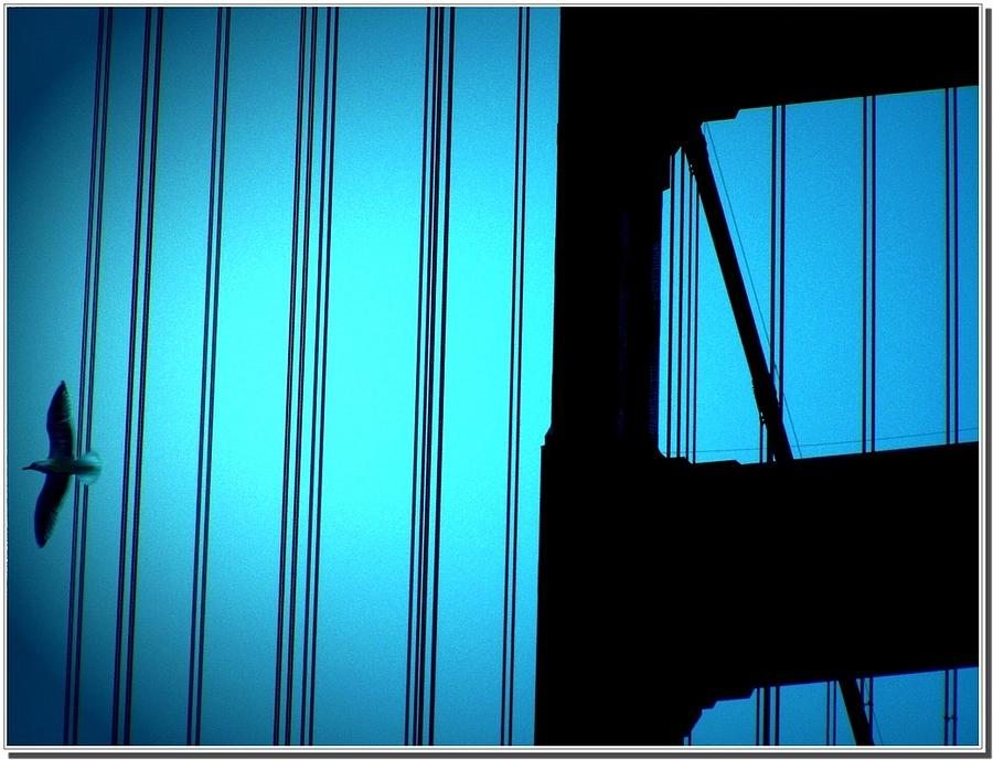 San Francisco Photograph - In Blue by Cher Ferroggiaro