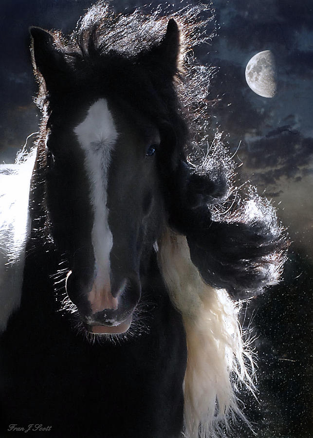 Horses Photograph - In Dreams... by Fran J Scott