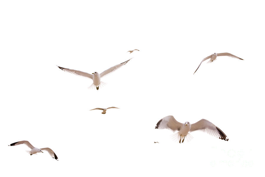 Birds Photograph - In Flight by Cindy Tiefenbrunn