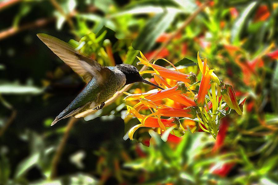 Hummingbird Photograph - In Flight Dining by Richard Henne