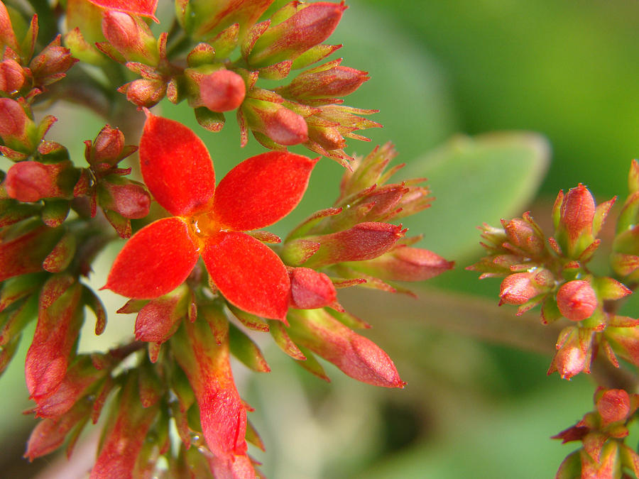 Red Photograph - In Grandmas Garden II by Stacy Michelle Smith