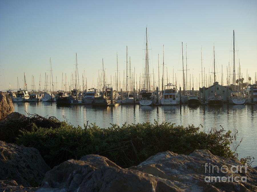 Sailboats Photograph - In Harbor by Amy Strong