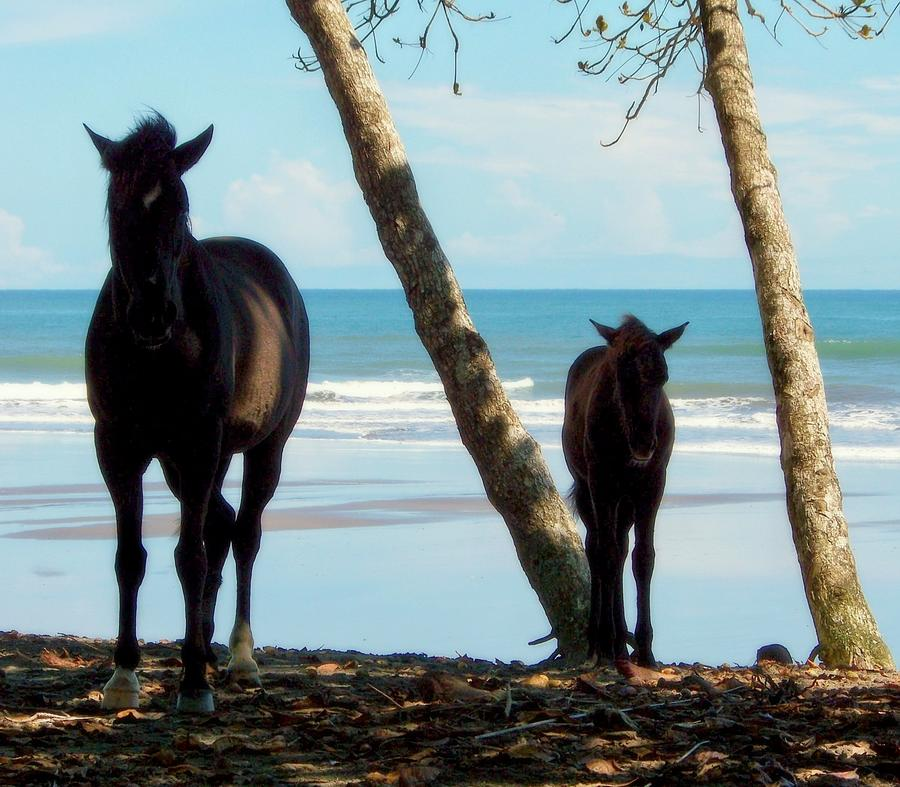 Horses Photograph - In Her Image by Karen Wiles