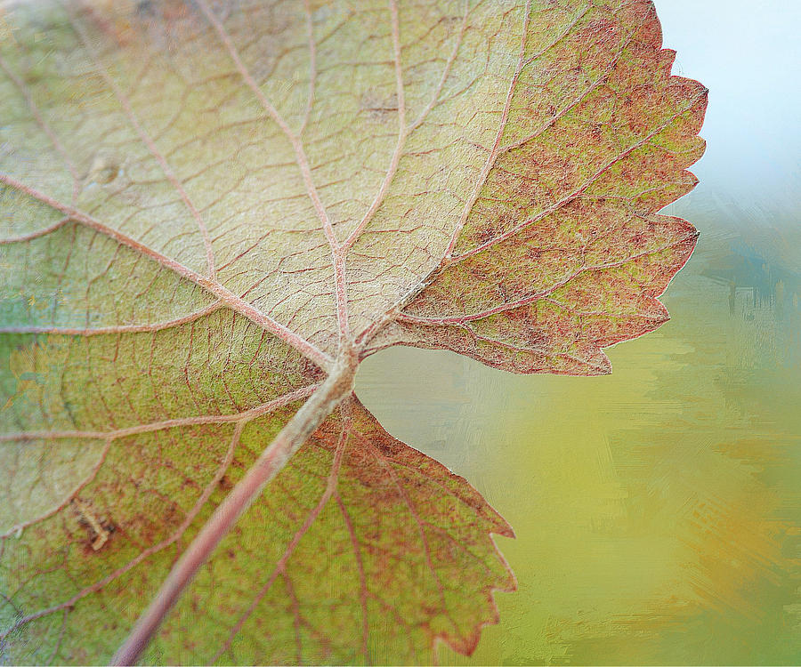 Grapevine Leaf Photograph - In Honor Of Autumn by Fraida Gutovich