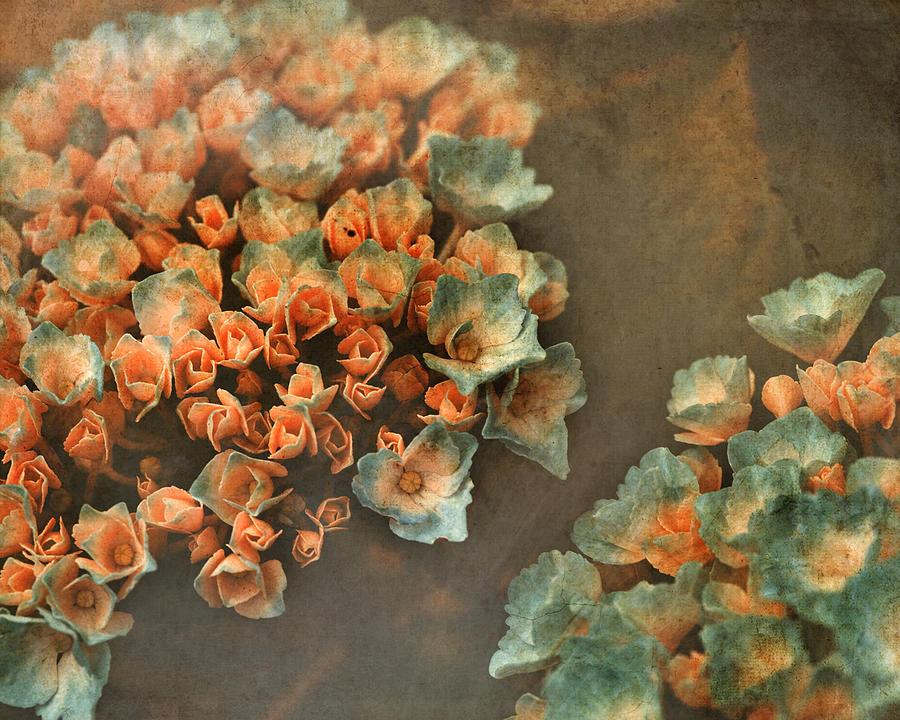 Hydrangeas Photograph - In My Dreams by Bonnie Bruno