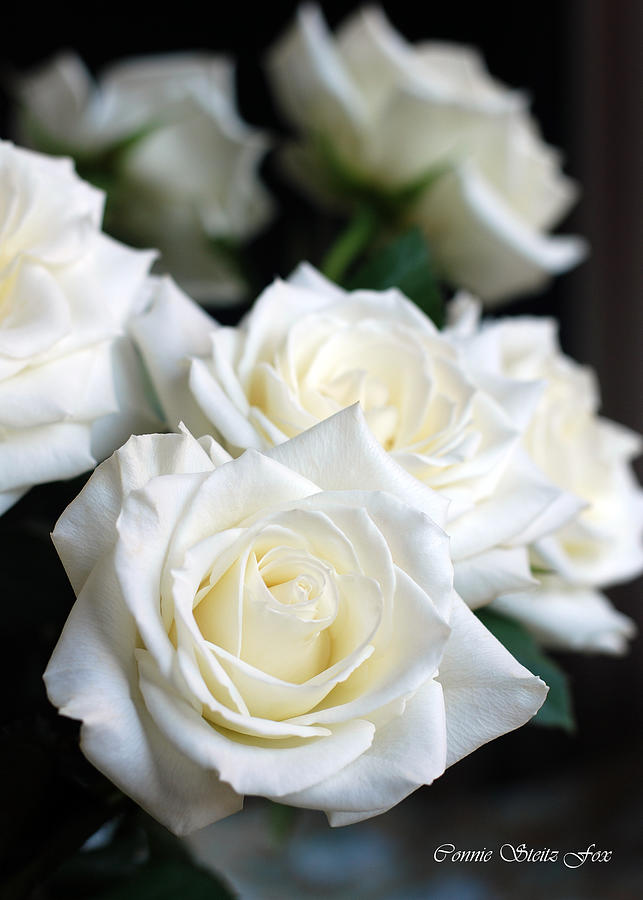 Flowers Photograph - In My Dreams - White Roses by Connie Fox