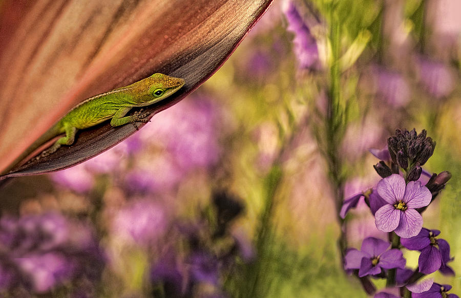 Skin Photograph - In My Garden by Linda D Lester