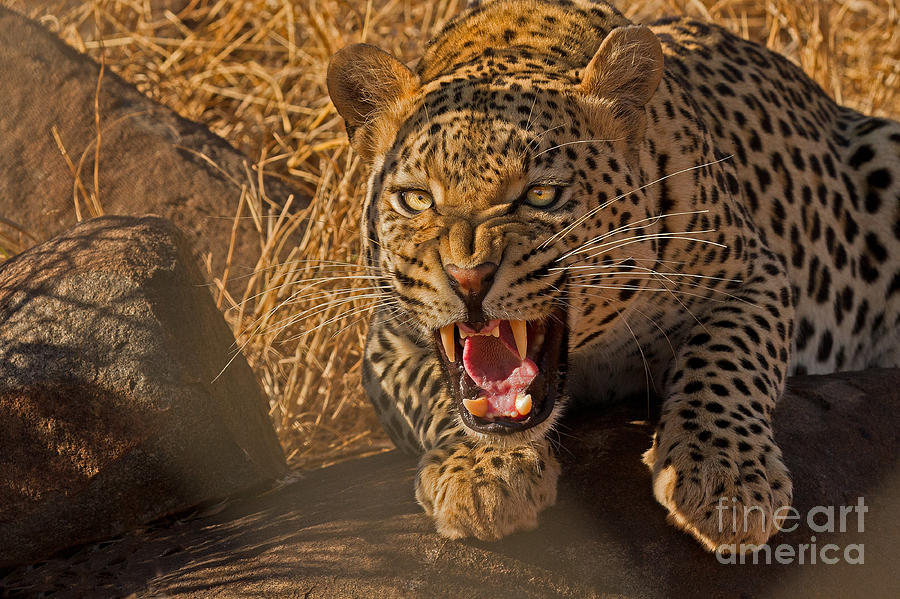 Africa Photograph - In No Uncertain Terms by Ashley Vincent
