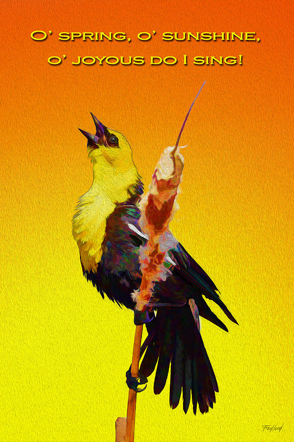 Bird Photograph - In Rapturous Joy He Sings by Fred J Lord