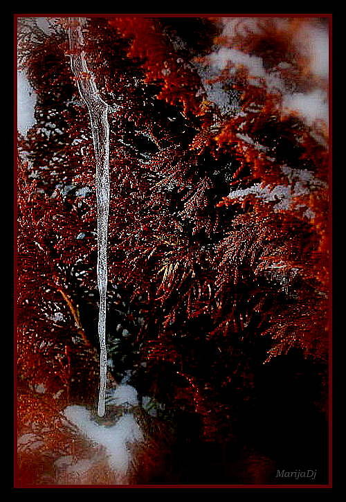 Nature Photograph - In Red by Marija Djedovic