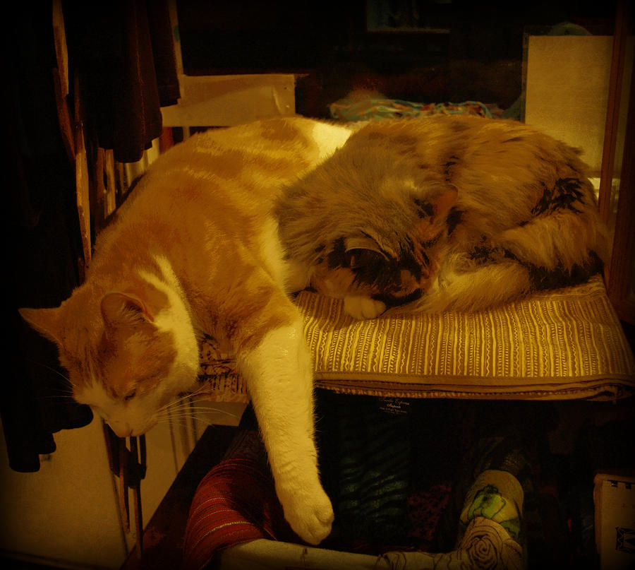 Cats Photograph - In Repose by Marilyn Wilson
