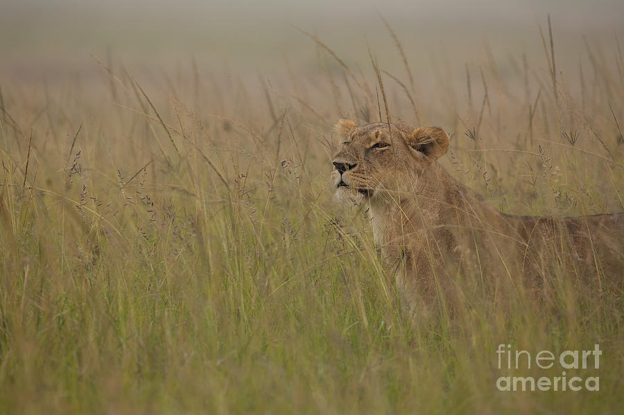 Africa Photograph - In Search Of Cubs by Ashley Vincent