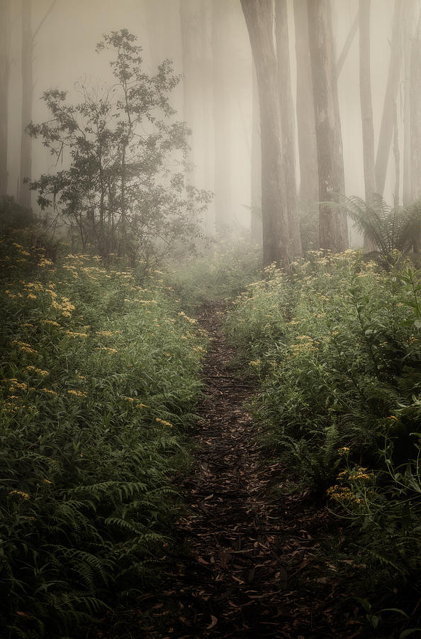 Fog Photograph - In Silence by Amy Weiss