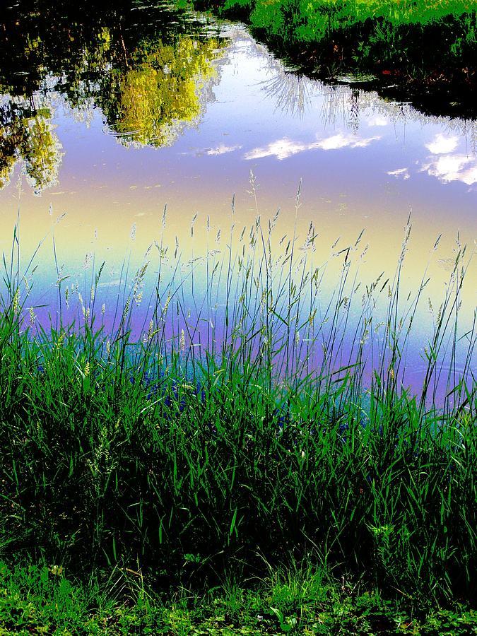 Weeds Photograph - In Spirit by Diane Miller