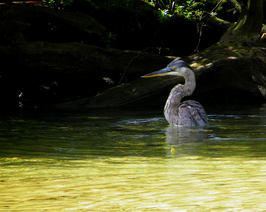 Nature Photograph - In The Bath by Judy Wanamaker