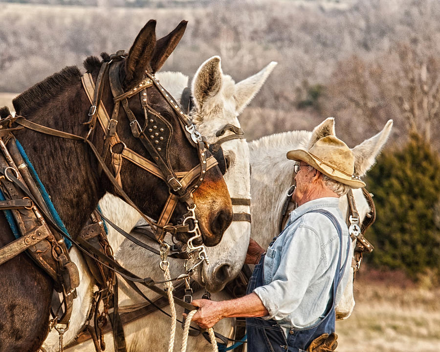 Equine Photograph - In the company of giants by Ron  McGinnis