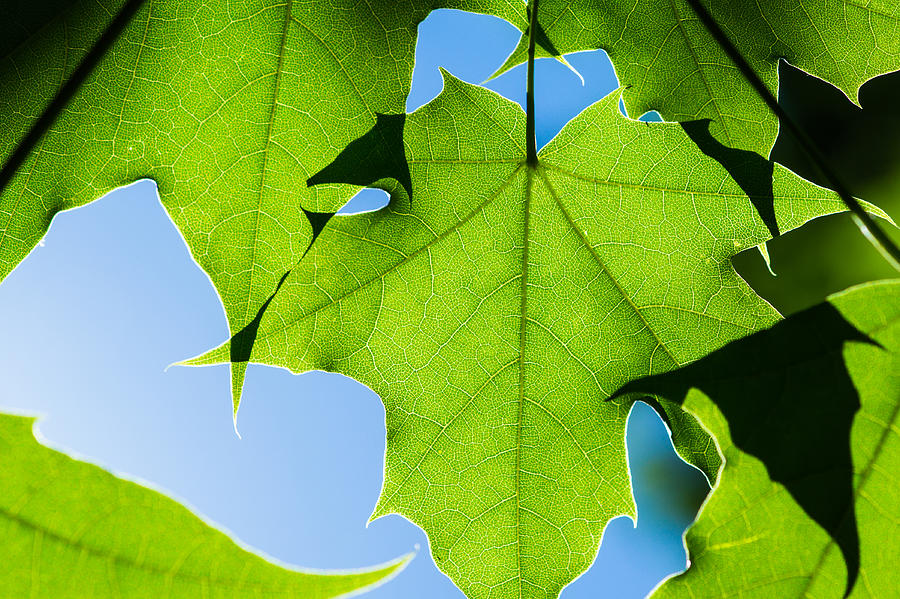 Abstract Photograph - In The Cooling Shade - Featured 3 by Alexander Senin