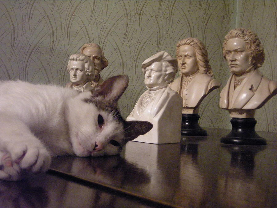 Cat Photograph - In The Drawing Room by Emilija Cerovic
