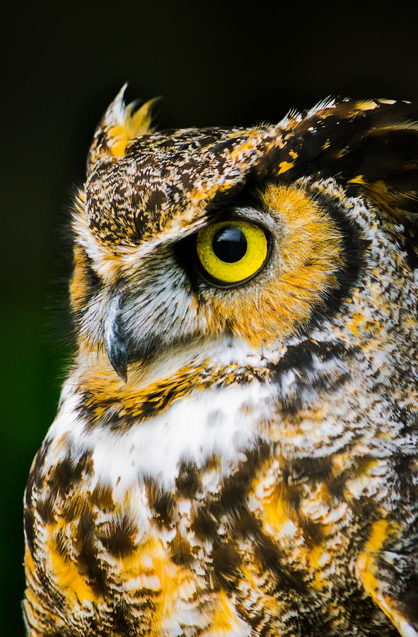 Owl Photograph - In The Eyes by Parker Cunningham