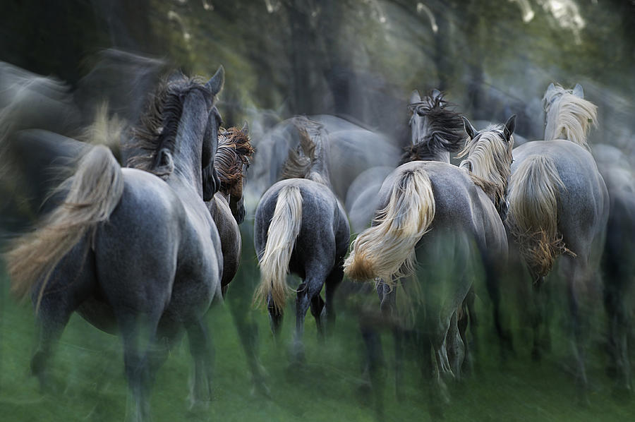 Animal Photograph - In The Gallop by Milan Malovrh
