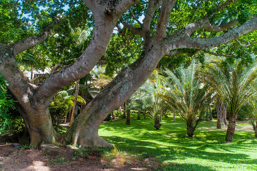 Mauritius Photograph - In The Garden. Mauritius by Jenny Rainbow