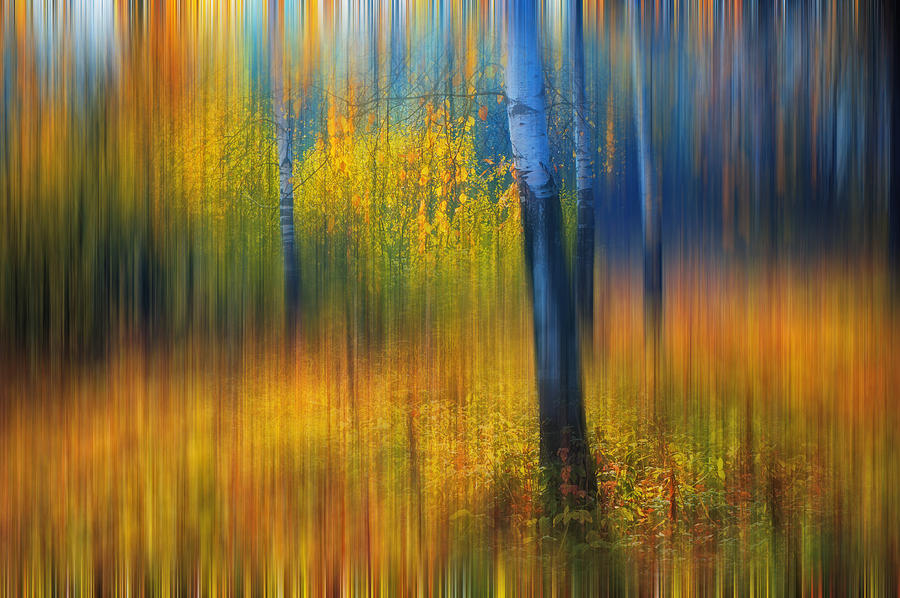 Autumn Photograph - In The Golden Woods. Impressionism by Jenny Rainbow