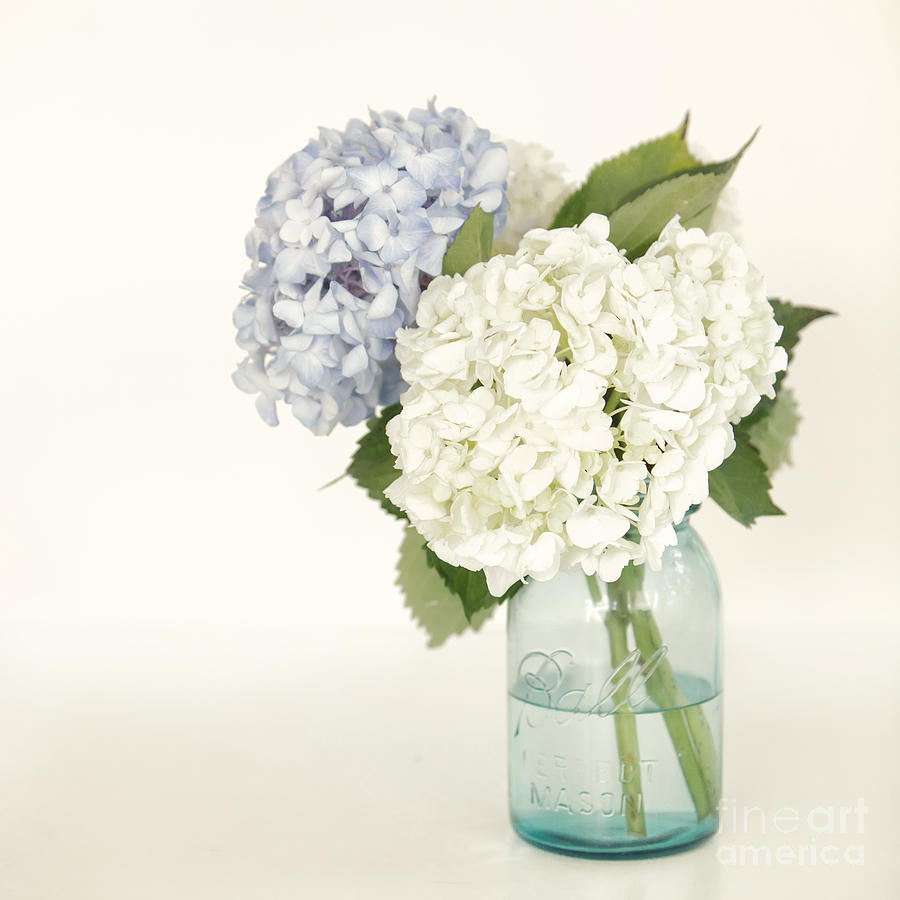 Hydrangea Photograph - In The Jar by Kay Pickens