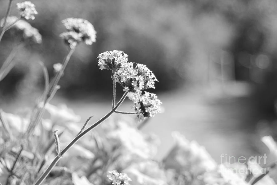 Flower Photograph - In The Meadow by Barbara Bardzik