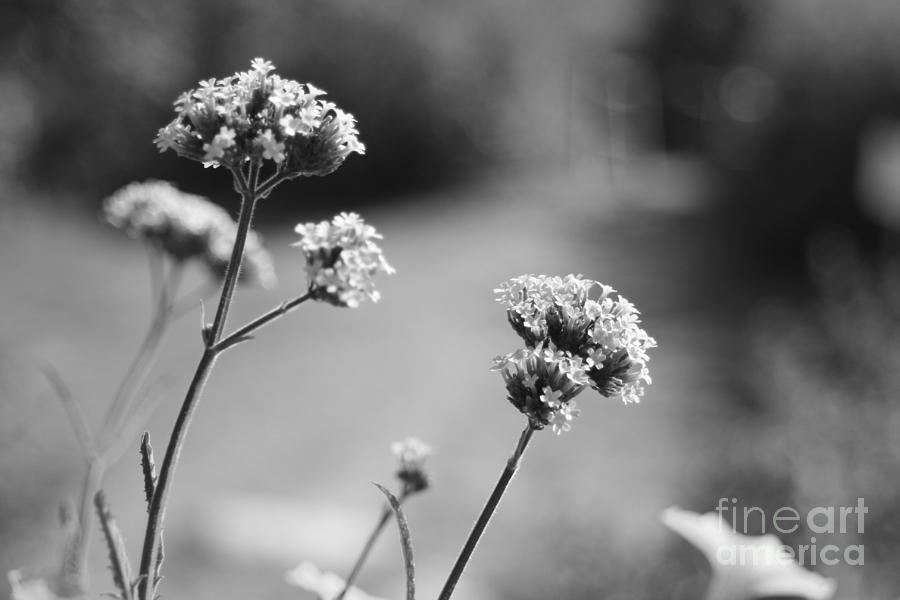 Photo Photograph - In The Meadow II by Barbara Bardzik