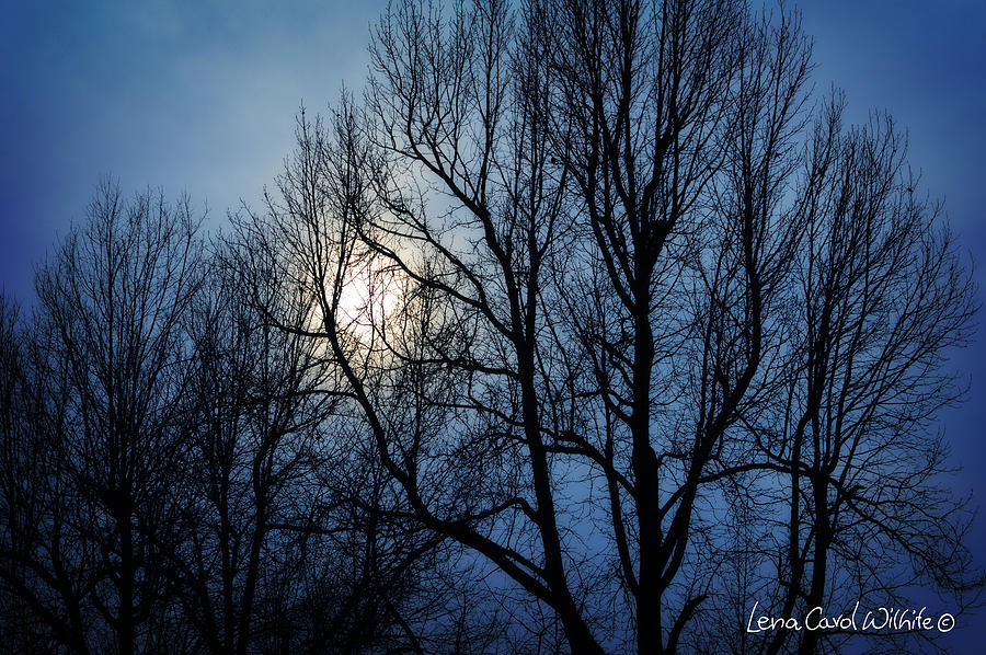 In The Midnight Hour by Lena Wilhite