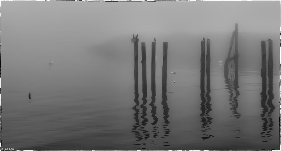 Birds Photograph - In The Midst Of A Fog by Richard Bean
