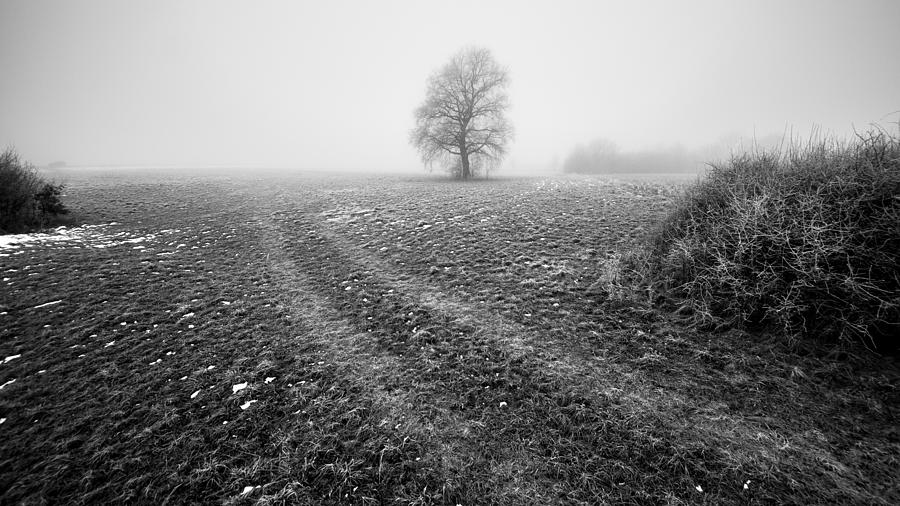 In The Mist Photograph