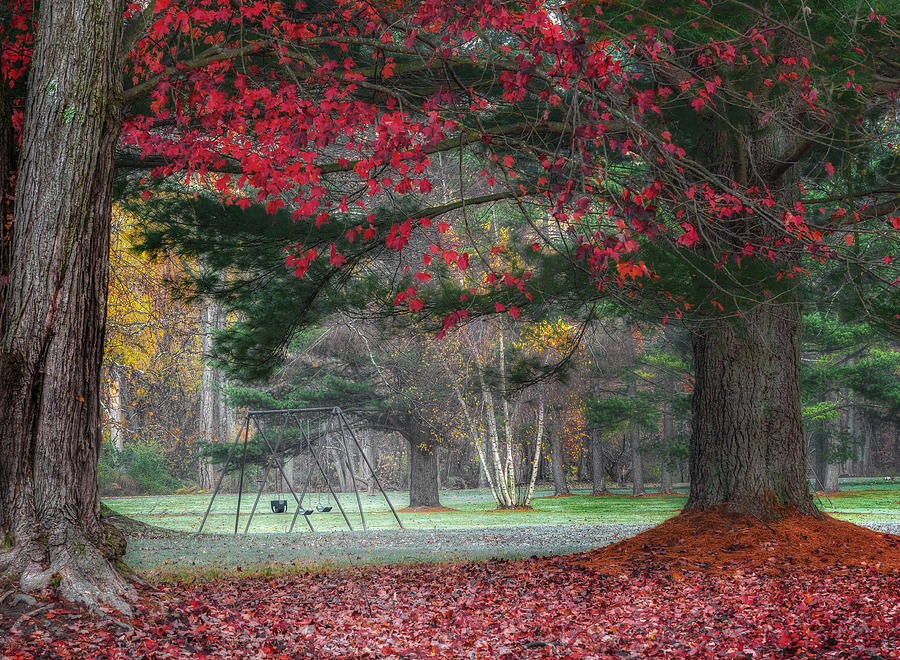 Fog Photograph - In The Park by Bill Wakeley