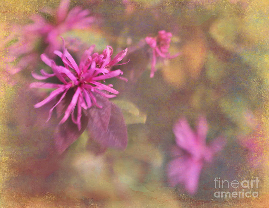 Lensbaby Photograph - In The Pink by Judi Bagwell