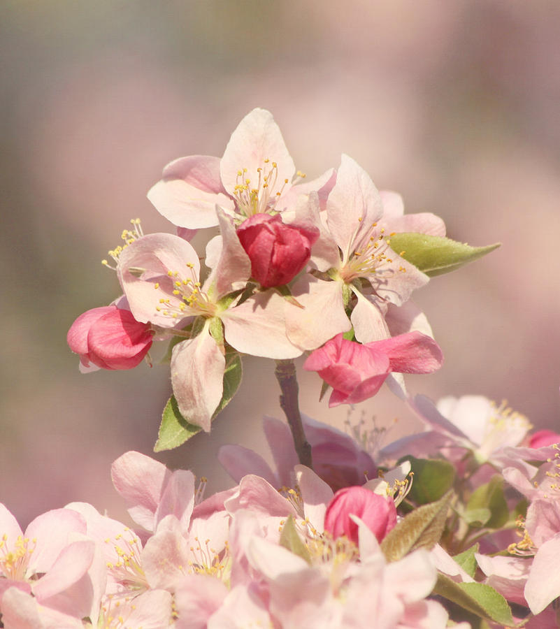Flower Photograph - In The Pink by Kim Hojnacki