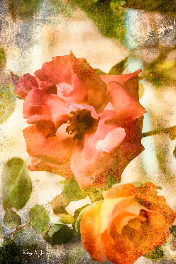 Roses Photograph - Floral - In The Rose Garden by Barry Jones