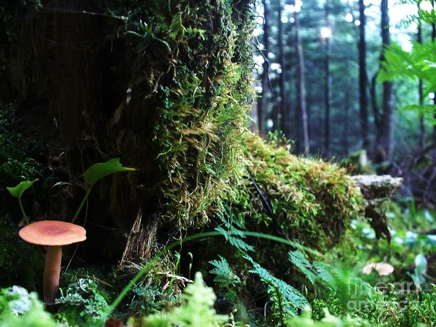 Moss Photograph - In The Shade by Steven Valkenberg