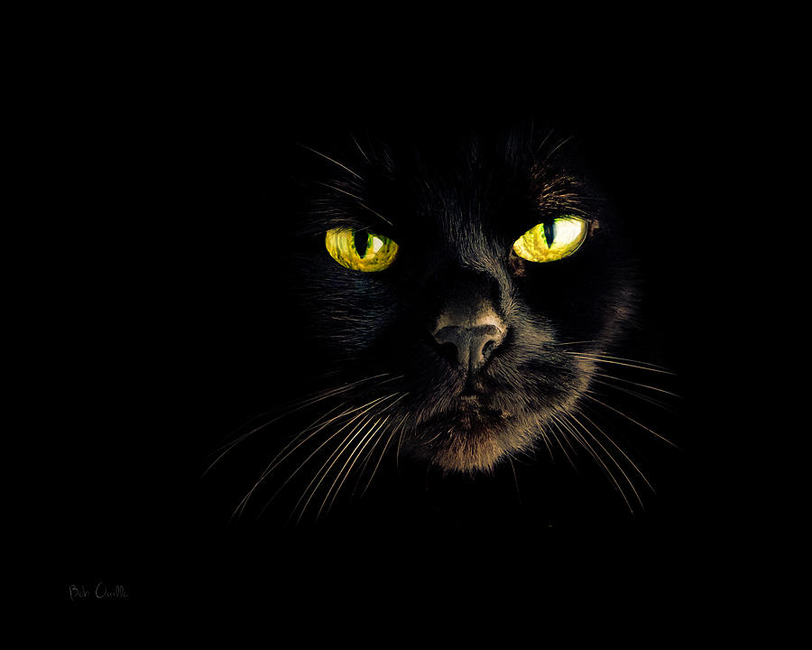 Animal Photograph - In The Shadows One Black Cat by Bob Orsillo