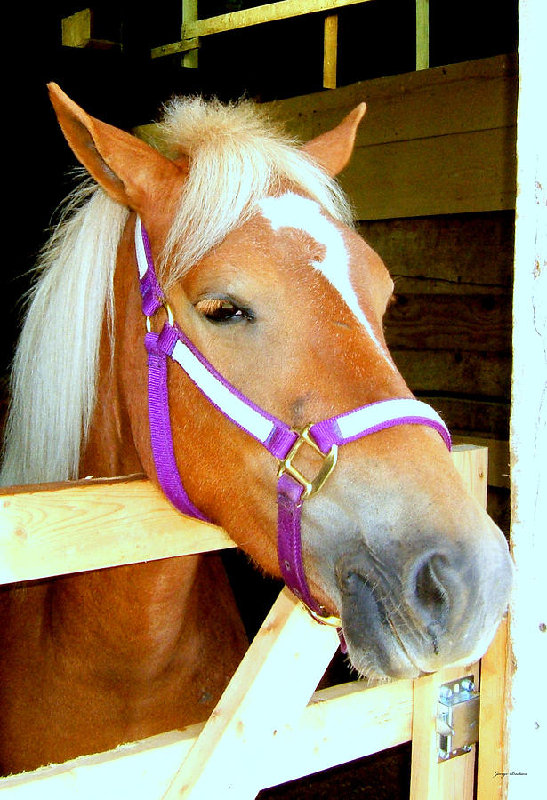 Horse Photograph - In The Stable 001 by George Bostian