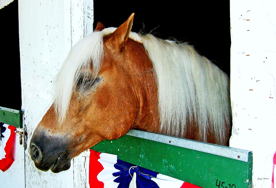 Horse Photograph - In The Stable 002 by George Bostian