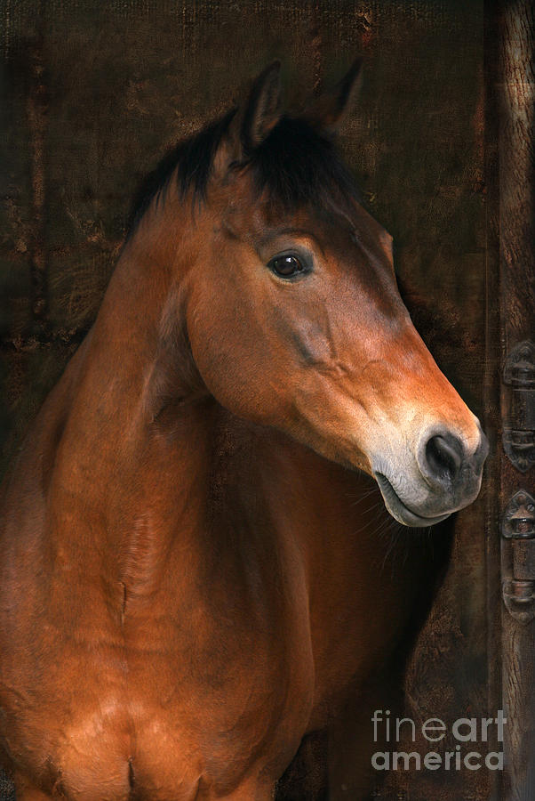 Horse Photograph - In The Stable by Angel  Tarantella