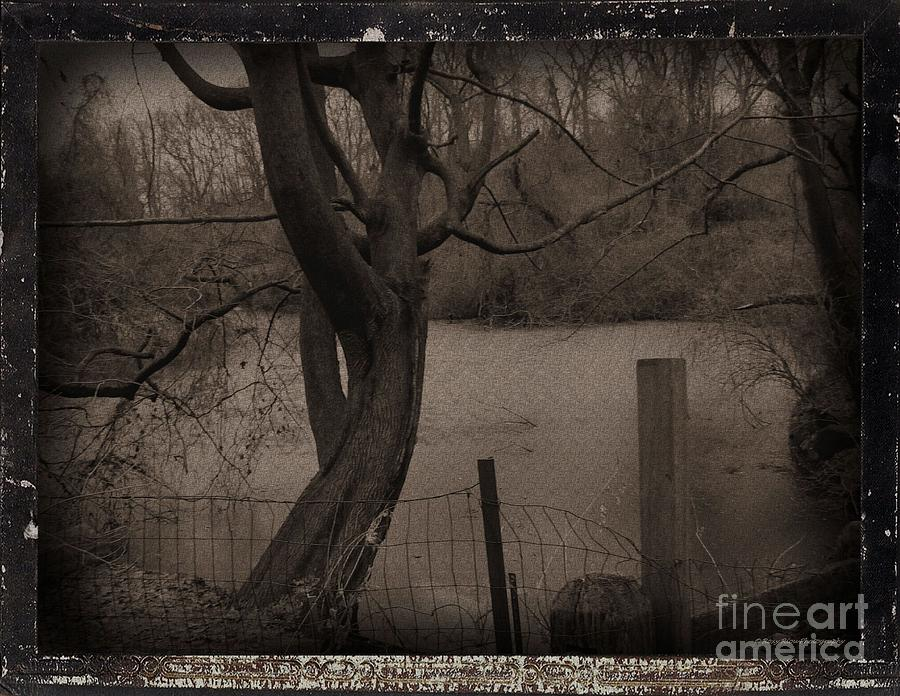 Trees Photograph - In The Times Of The Hanging Trees by Roxy Riou