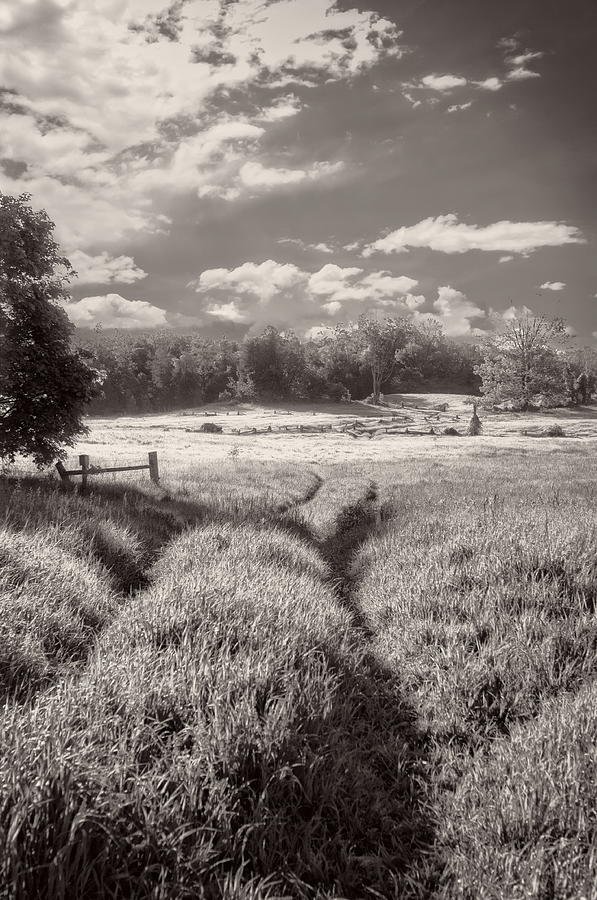 D300 Photograph - In the Valley - Scottsdale Farm by Alan Norsworthy