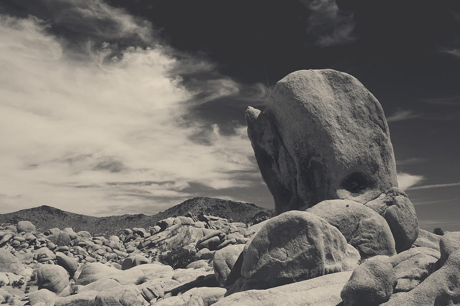 Joshua Tree National Park Photograph - In This Strange Land by Laurie Search
