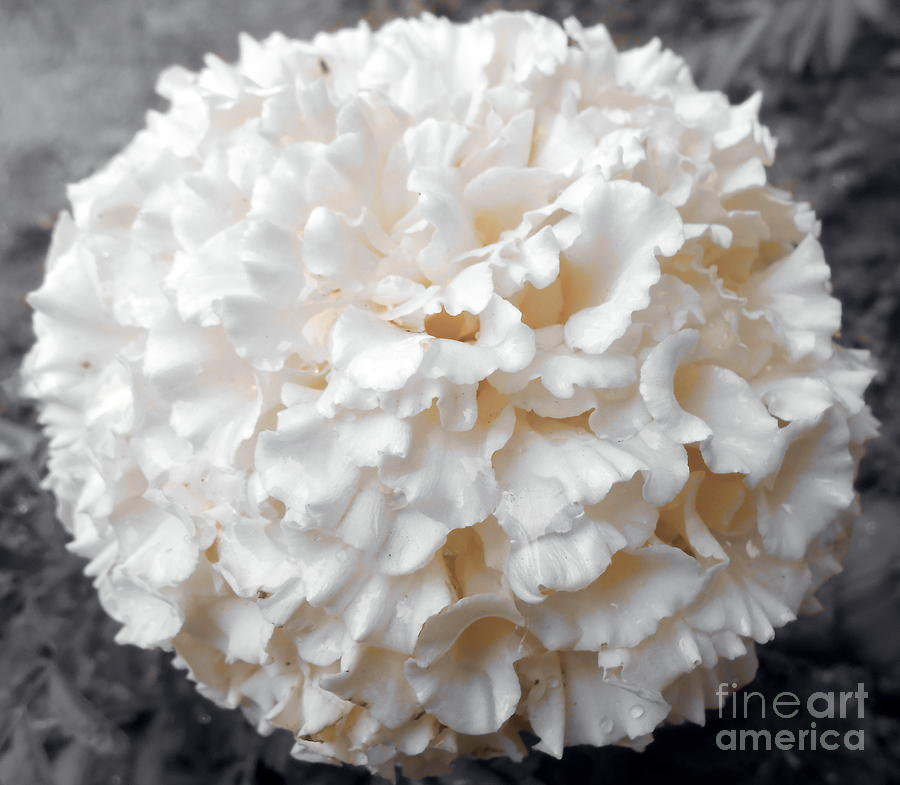 Black And White Photograph - Pastel Hues by Ioanna Papanikolaou