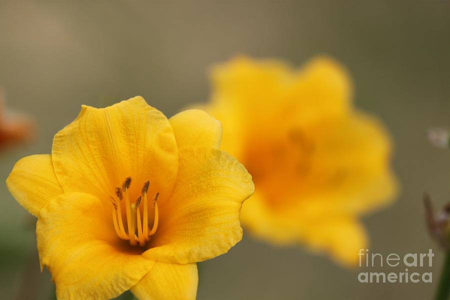 Perennial Flowers Digital Art - In Your Image by Jennifer E Doll